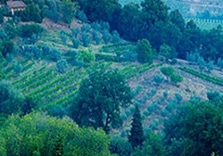 How does a private Tuscan Wine Tasting sound?  Image courtesy of CNM Shore Excursions Group